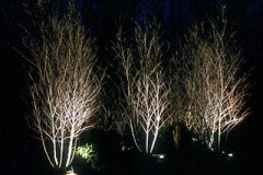lightingtrees